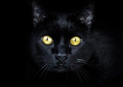 black-cat-3753932_1280