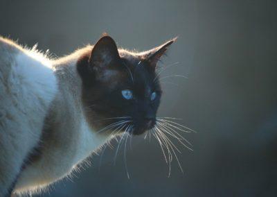 cat-1083393_1280