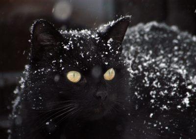 cat-1977416_1280