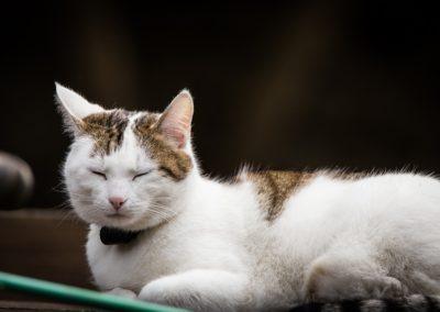 cat-2420165_1280