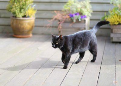 cat-2690236_1280