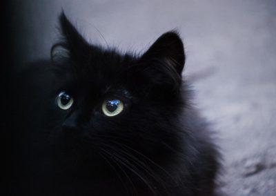 cat-3418832_1280