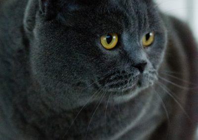 cat-3616919_1280