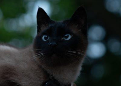 cat-4334000_1280