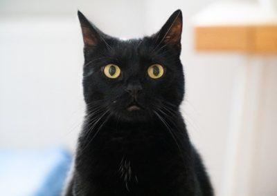cat-4445522_1280