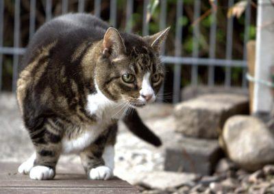 cat-4461885_1280
